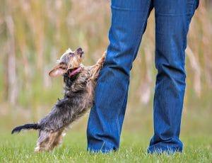 como-adestrar-um-cachorro-sem-broncas