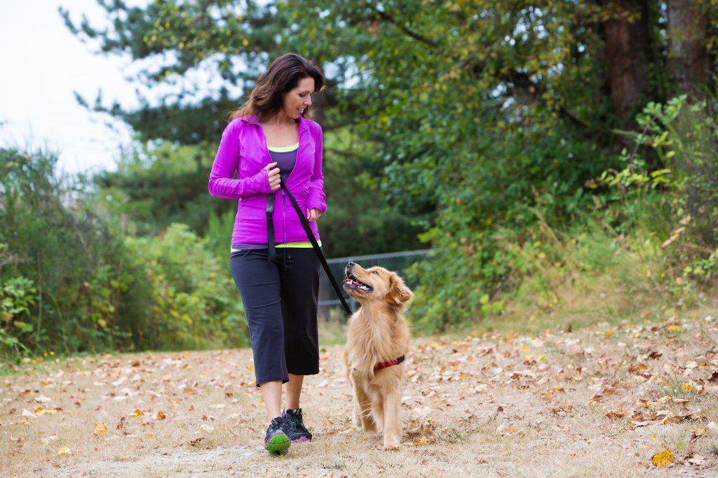 Teimosia é uma característica humana, e não canina