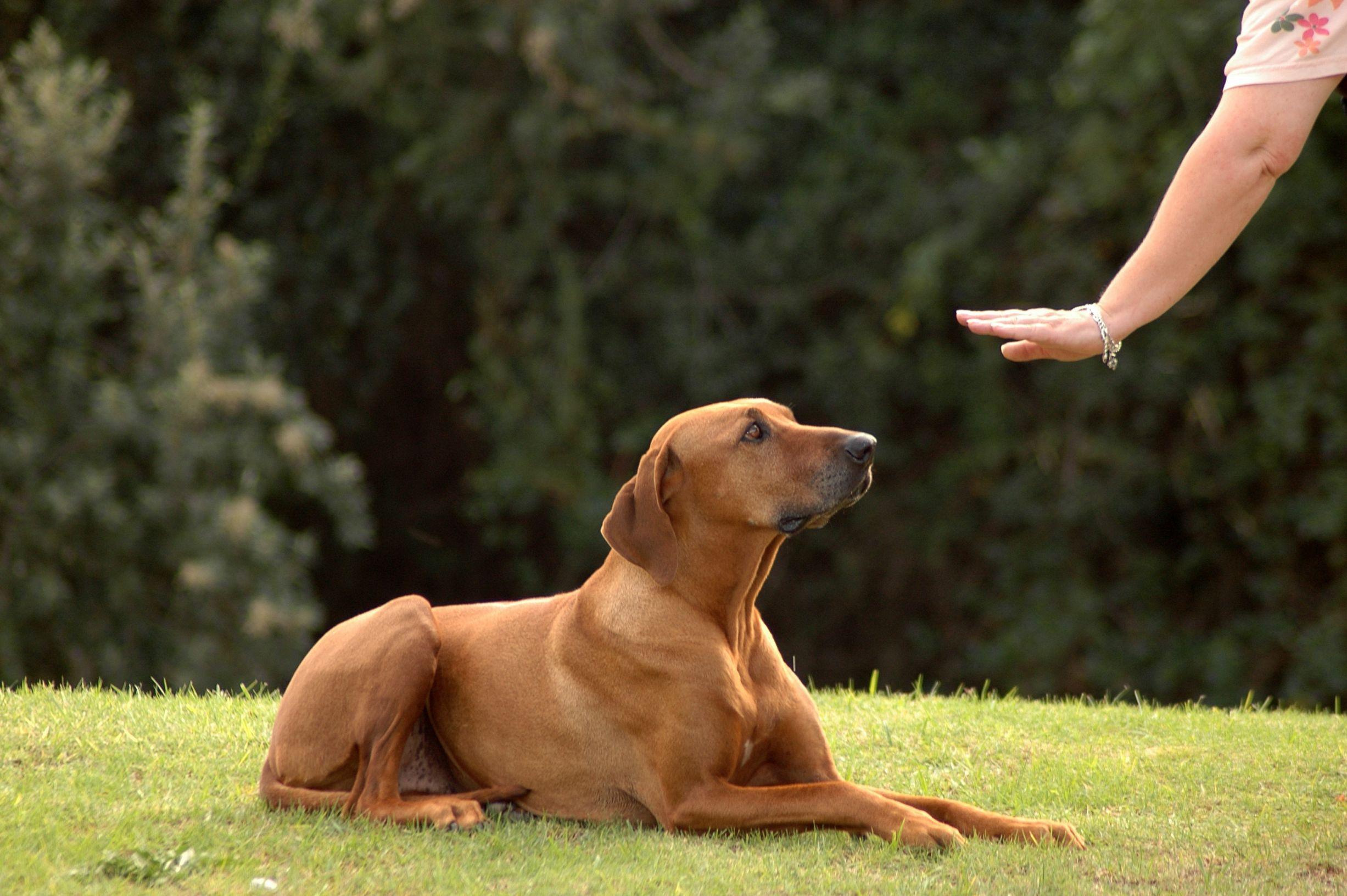 como treinar um cachorro