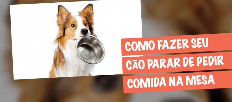 Cão Pedindo Comida na Mesa