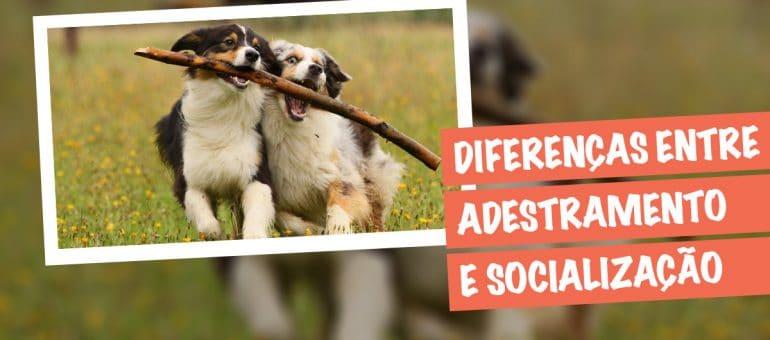 diferencas-entre-adestramento-e-socializacao