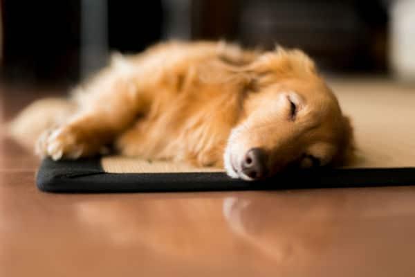 Posição de sono profundo: tocando com o lado do corpo todo o piso
