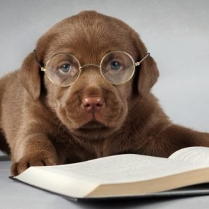 dog_with_glasses_